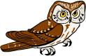 barn_owls