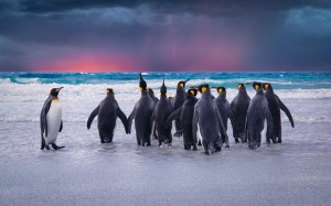 Penguins Printable
