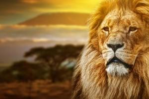 Lions Printable