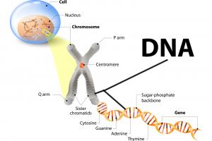DNA Printable