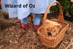 wizard-of-oz-300x200