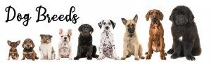 Dog Breeds Printable