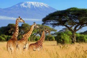 Giraffes Printable